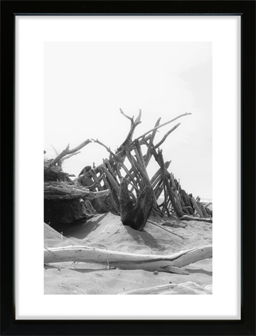 Driftwood - Dillon Beach - Californien