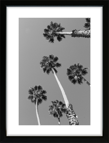 Palm Trees in Santa Barbara - Fotoplakat