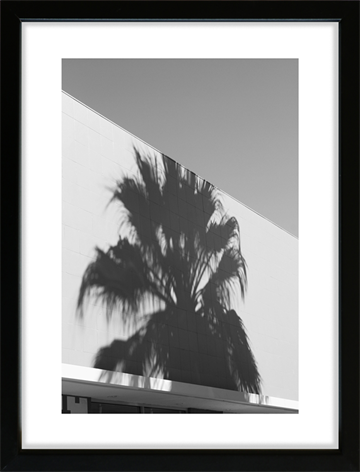 Foto print -  Shadow - Palm Tree against the wall